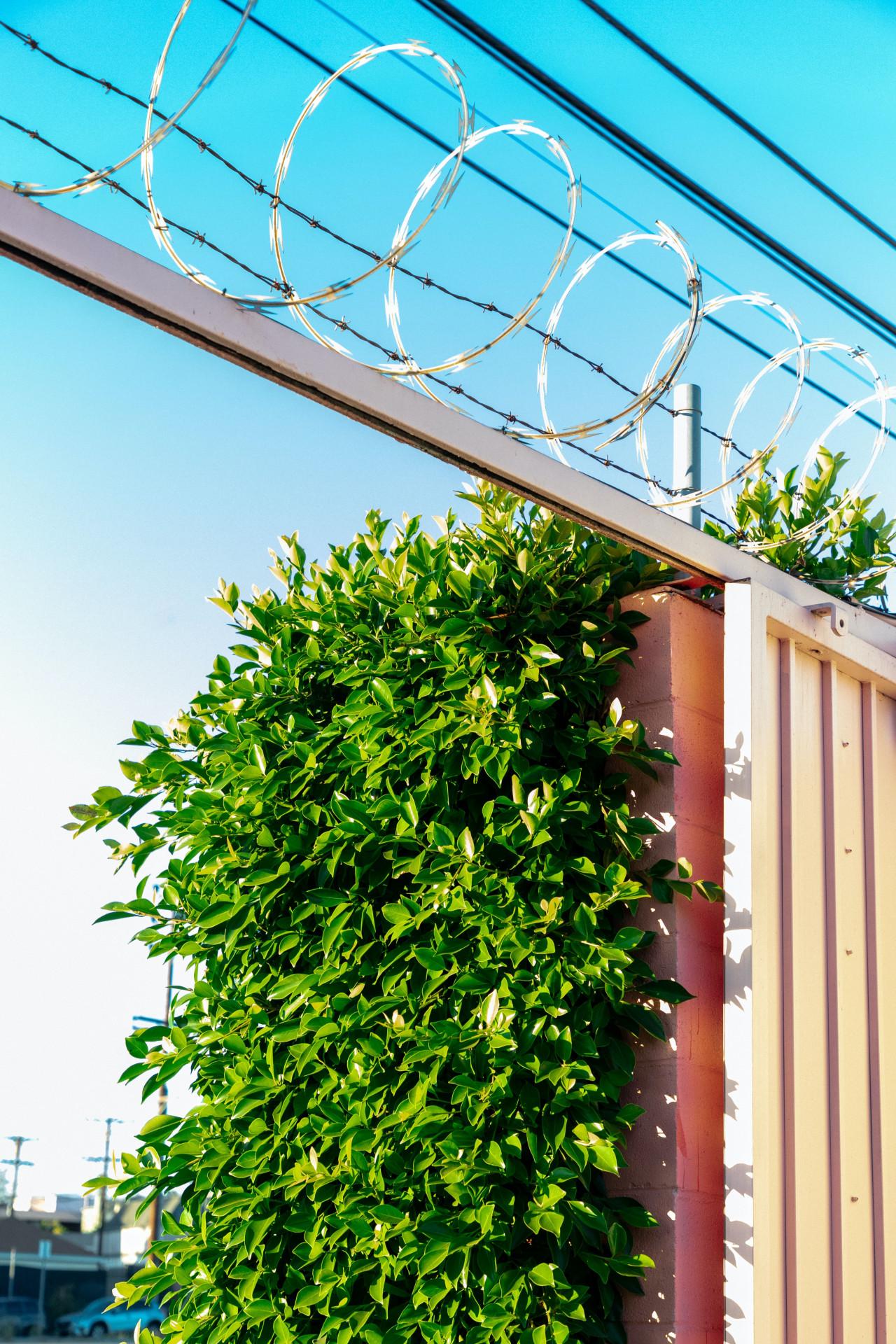 จัดสวนข้างบ้านด้วยต้นไม้ปลูกริมรั้ว